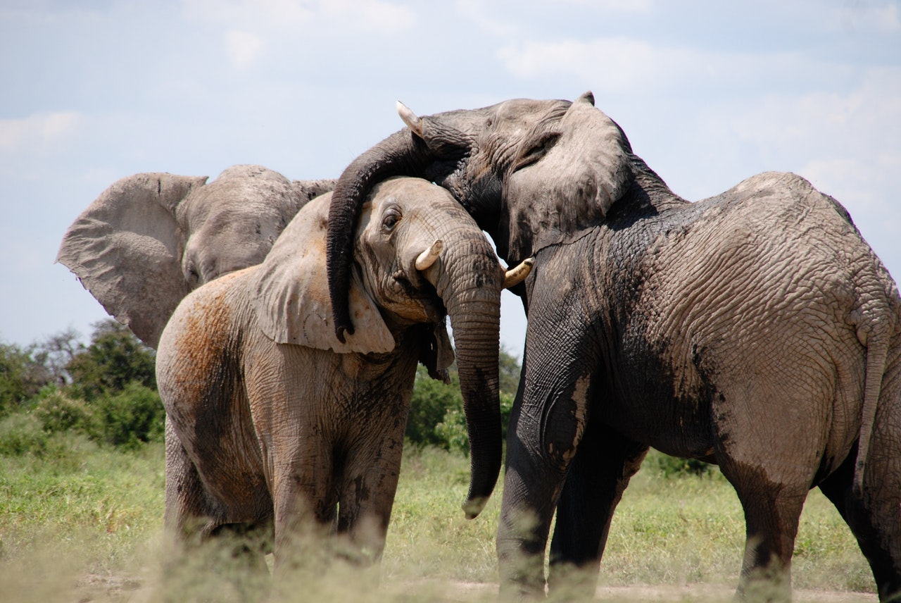 Volunteer Africa Animals | Tiritose Sustainable Travel